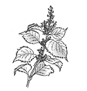 花粉症のアロマテラピー