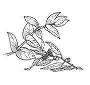 花粉症のリフレクソロジー